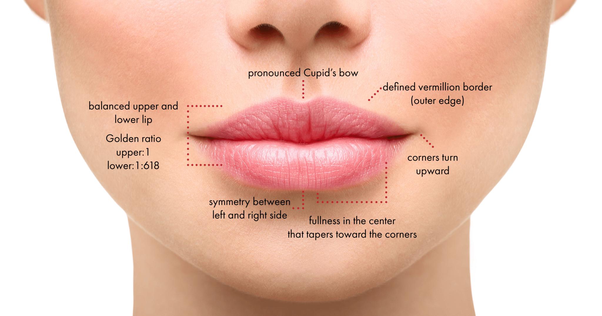 lip filler augmentation diagram in new york
